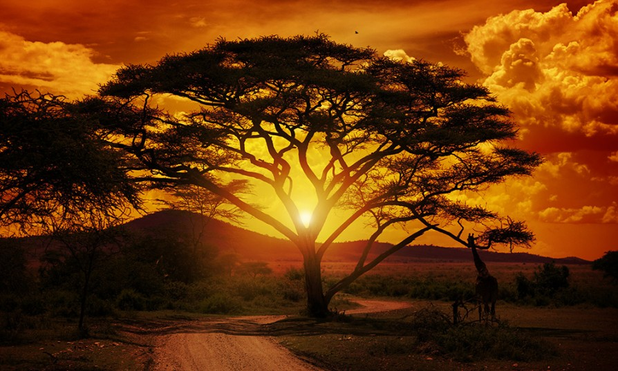 Vacation Spots In Africa