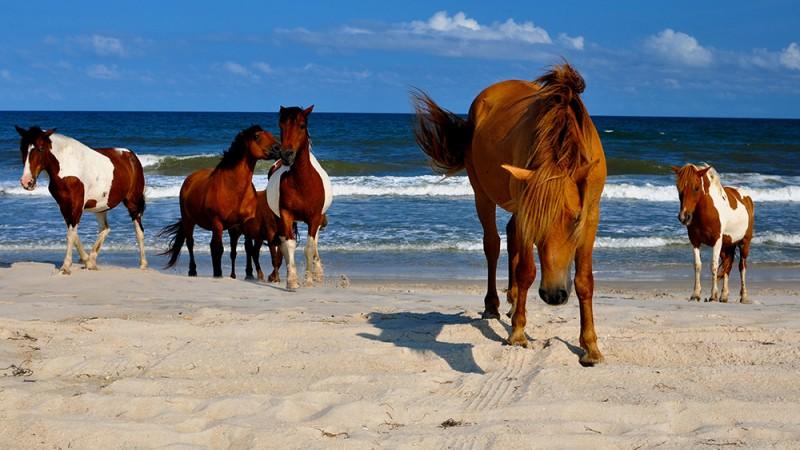 Assateague Beach, Virginia