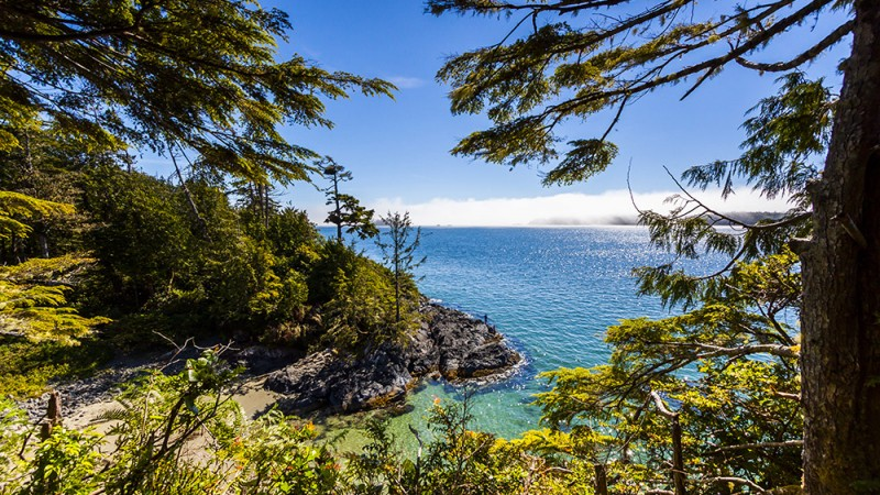 Poole's-Land,-Tofino,-British-Columbia
