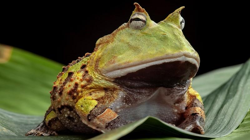 toad-suck-arkansas