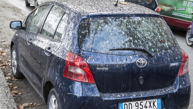birds-pooping-on-your-car