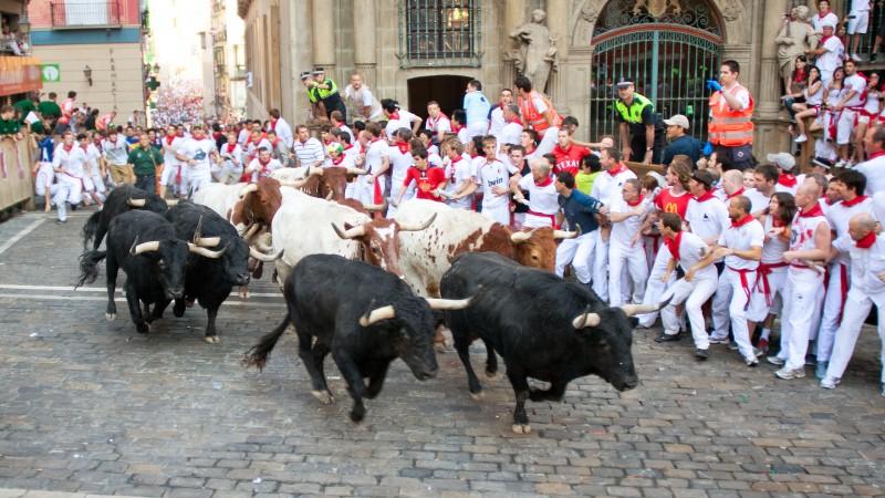 1 Steer Bull