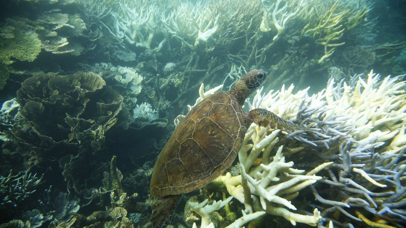 4-Ningaloo-Reef
